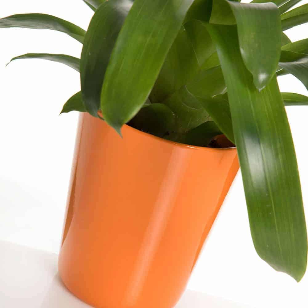 Vriesea arancio in vaso di ceramica - Lezio.it Shop Online ...