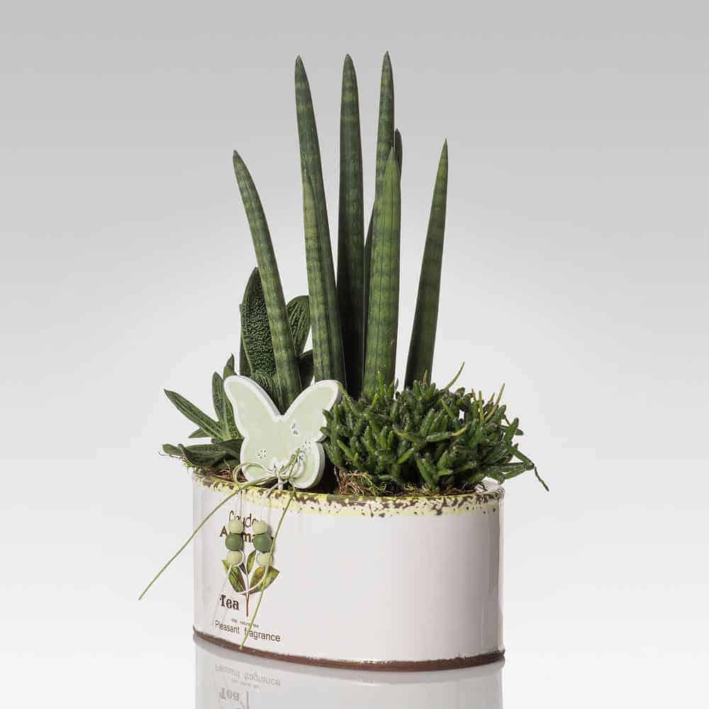 Le piante grasse più belle in vendita online su Lezio ...
