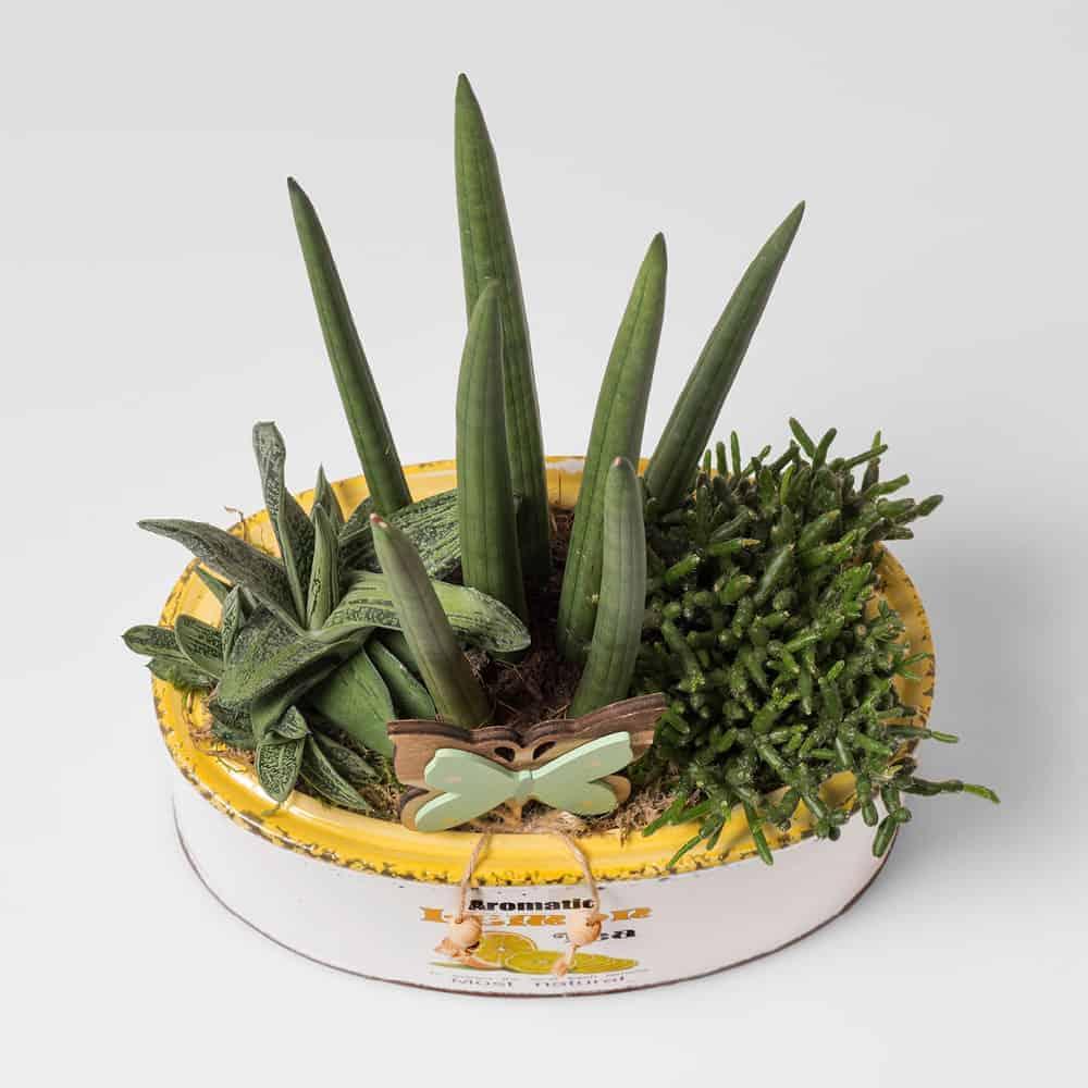 Piante Grasse Piccole Prezzi composizione con piante grasse