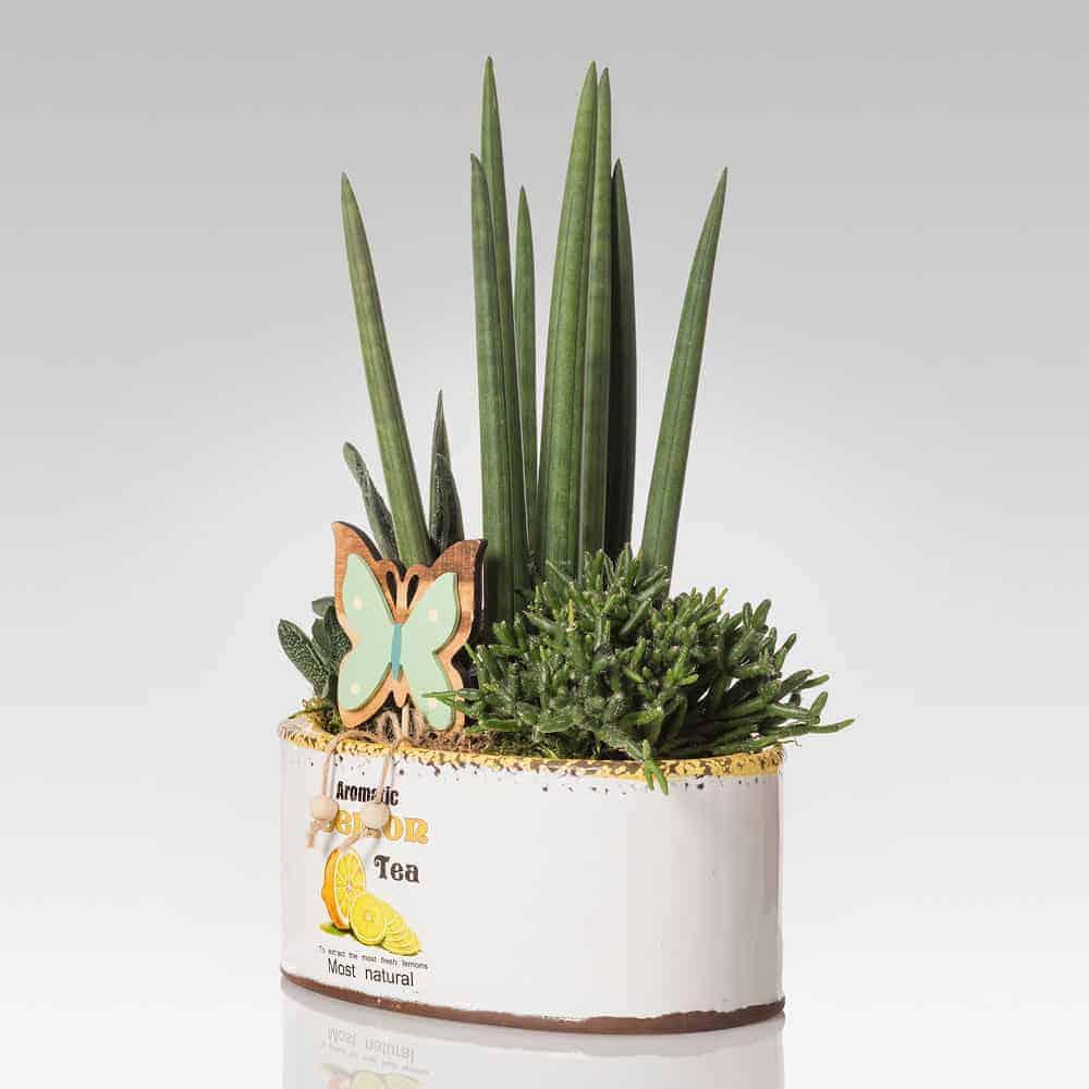 Vasi Per Piante Grasse.Composizione Con Piante Grasse